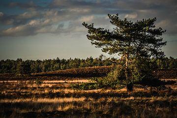 Landschaft von Elsbeth Beltman