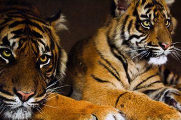 Die Tigerin und ihr Kind von Samira Uddin