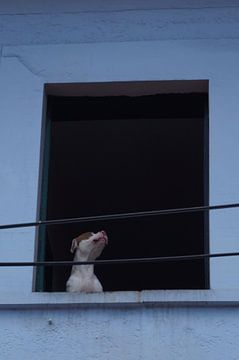 El Perro von Iris Ritzen