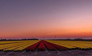 zon's ondergang over de tulpen van Michael Verbeek
