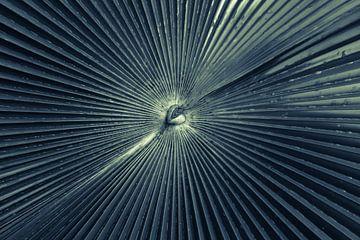 Nerven in een palmblad van Tessa Louwerens