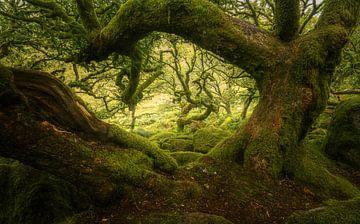 De meest spookachtige plek op Dartmoor van Joris Pannemans - Loris Photography