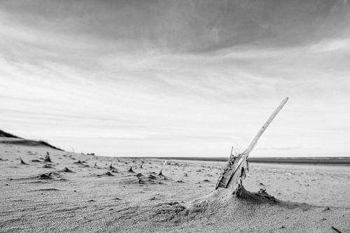 de veer in het strand
