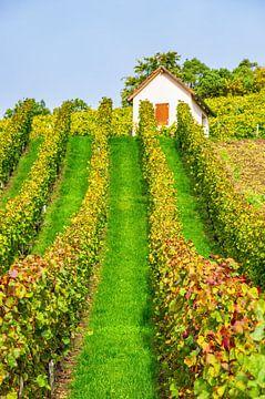 In de wijngaard in de herfst van Ullrich Gnoth