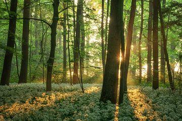 lentemorgen van Martin Podt
