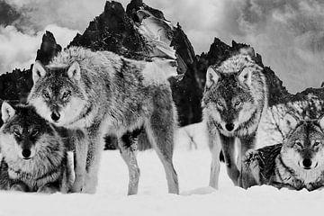 Wolfsgebirge von Mateo