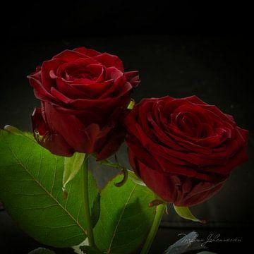 Twee rode rozen van Torfinn Johannessen