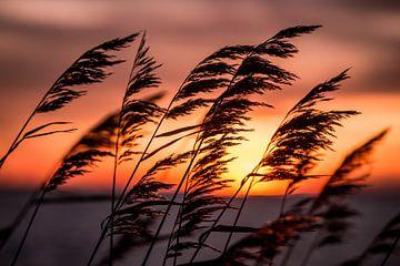 Warmer Sonnenuntergang an einem Wintertag von Koen Hoekemeijer