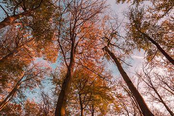 Bomen van onderen van Nynke Nicolai