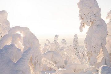 Sonne und Schnee in Lappland von elma maaskant
