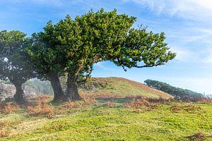 Het Prehistorische Bos van Freek van den Driesschen