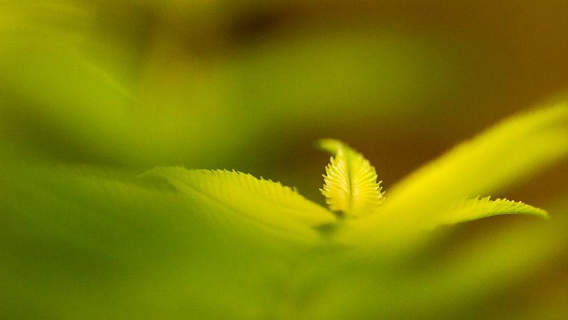 green leaves van Maja Ooms