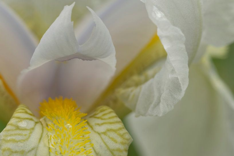 Iris flower sur Julien Willems Ettori