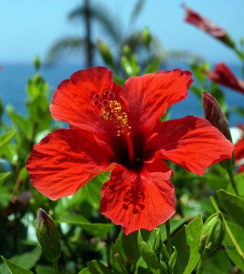Hibiscus van Iwona Sdunek alias ANOWI