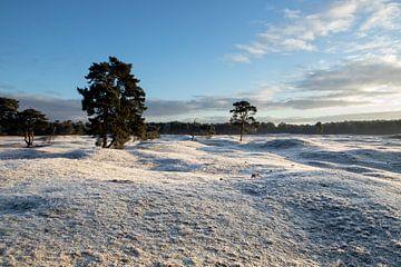 Winter auf Gut Heidestein Bornia in Driebergen Zeist von Peter Haastrecht, van