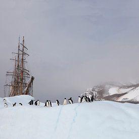 Antarctica - Adelie penguins meet Bark Europa van ad vermeulen