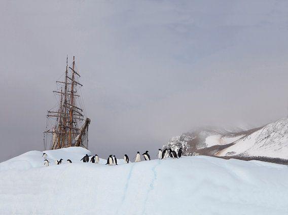 Antarctica - Adelie penguins meet Bark Europa