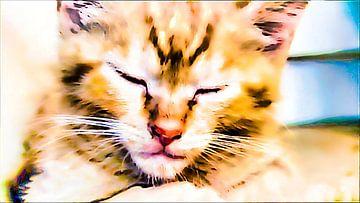 Schläfrige Katze van Margitta Frischat