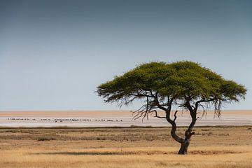 Afrikaanse vlakte van Adri Klaassen