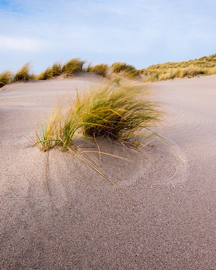 Maasvlakte 25