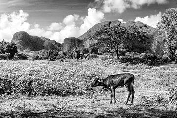 Landschap Vinales in zwart wit von Jack Koning