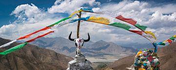 Schedel van een jak op een bergtop in de Himalaya, Tibet van Rietje Bulthuis