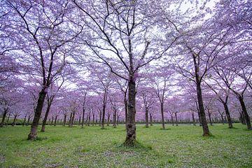 ein Park voller blühender Bäume von Dennis Bresser