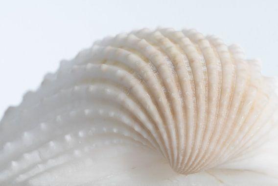 Witte schelp van Marianne Twijnstra-Gerrits