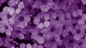 Blüten violett Strauch