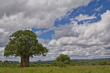 Een baobab boom op de Afrikaanse savanne van Peter van Dam