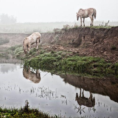Mystische pferde im nebel (nr. 7 von 8) von Ramona Stravers