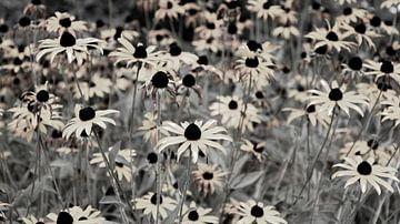 Champ de fleurs naturel noir blanc