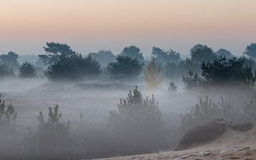 Sonnenaufgang Heideland Aekingerzand von P Kuipers