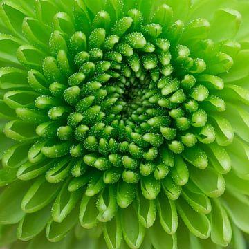 groen, groen, groen, van Klaartje Majoor