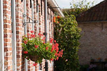 Bloemen aan historische gevels van Fotografiecor .nl