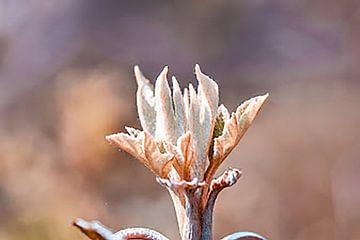 Une jolie fleur colorée à base de macrolens ! sur Jennifer Petterson