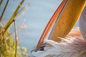 Vogels | Roze pelikaan portret van Servan Ott
