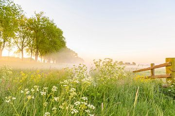 Frühmorgendlicher Sonnenaufgang an einem schönen Frühlingstag über dem Zwartendijk, von Sjoerd van der Wal