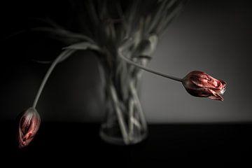 Tulpen in de avondschemering van Mark Isarin | Fotografie