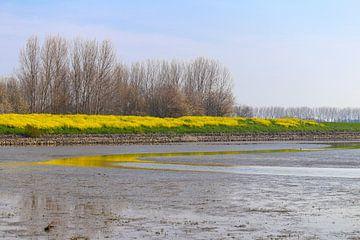 Schöne Aussicht auf das Niedrigwasser von Chantal
