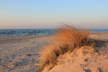 Abendsonne im April von Ostsee Bilder