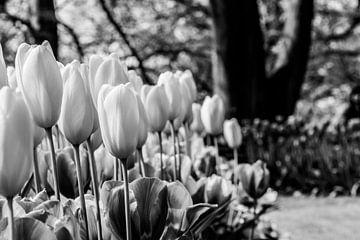 Tulpenbloembed in zwartwit van Leontien van der Willik-de Jonge