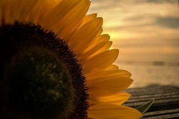 Zonnebloem voor het zonsondergang van Robert Snoek