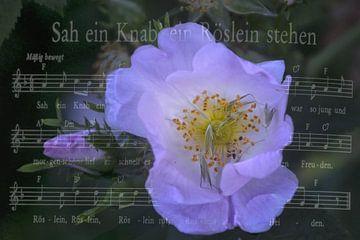 Een jongen zag staan een roos van Christine Nöhmeier