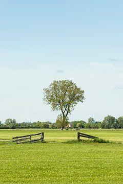 Baum in Wiese mit Zäunen