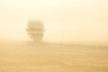 Alblasserwaard in de mist van Maarten Heijkoop