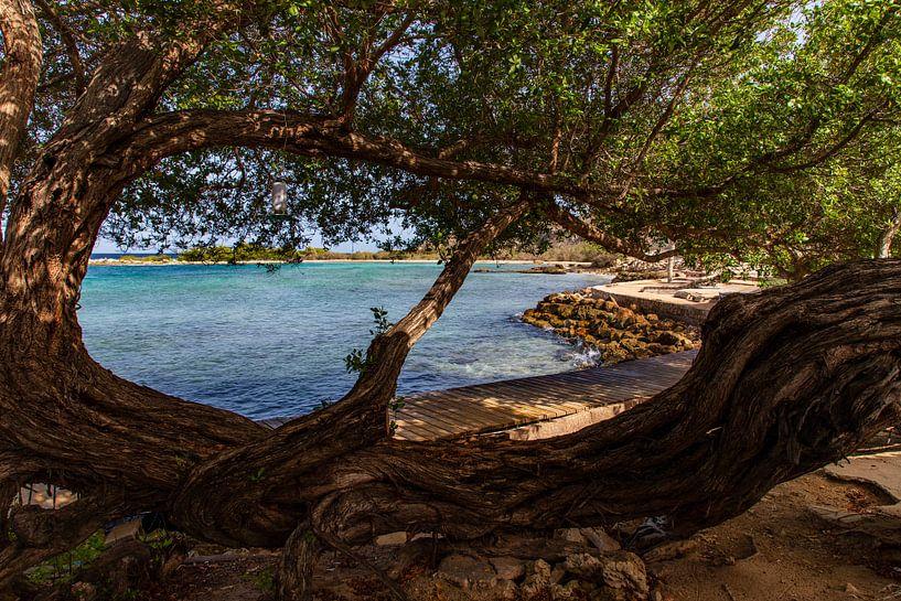 de Caribbean van Willemke de Bruin
