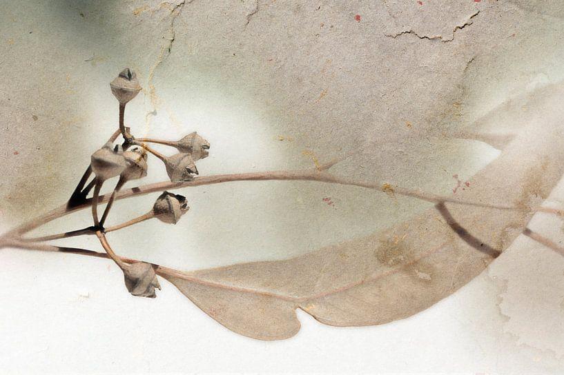 Rameau d'eucalyptus van Martine Affre Eisenlohr