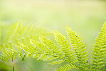 Natuur blad, groen van Lisanne Koopmans