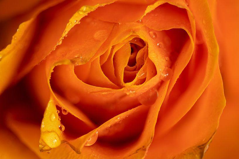 Een weelde van oranje en geel van Karin aan de muur
